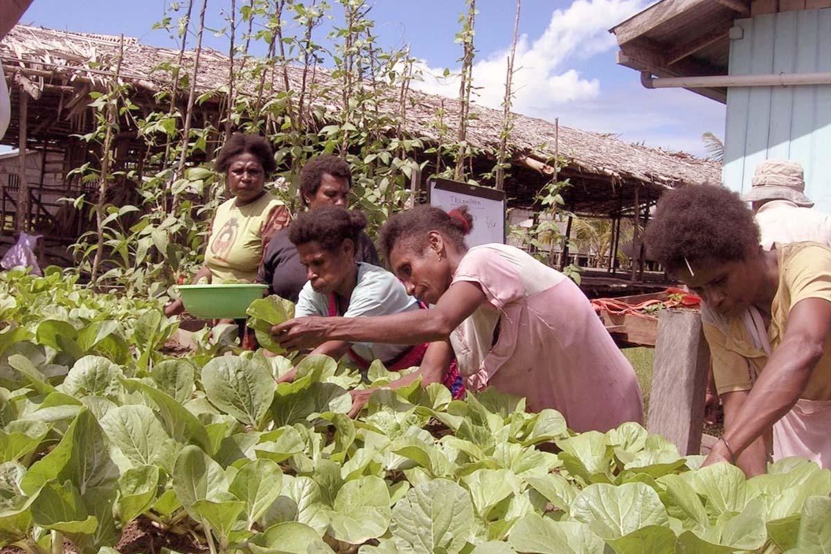 Pelajaran Dari Papua Untuk Mengubah Arah dan Orientasi Pembangunan